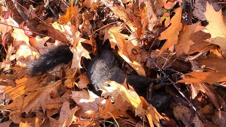 Another squirrel down!