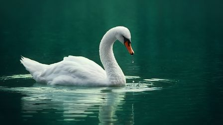 Wild geese near Stroud in Gloucestershire and swans near Dawlish in Devon have tested positive for h