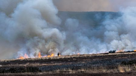 Heather burning produces succulent new tips for grouse and other birds to feed on, and removes the h