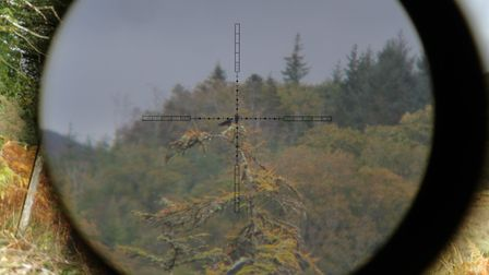 A hooded crow in trouble! Zeroed at 150 yards I took this shot at 204 yards using the four Mil Dot d