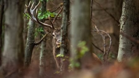 Rough shooting, wild fowling, and deer stalking are allowed during lockdown in Northern Ireland as l