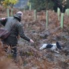 KC hunting guidelines state that 10-15-yards either side of the handler is a reasonable range for a