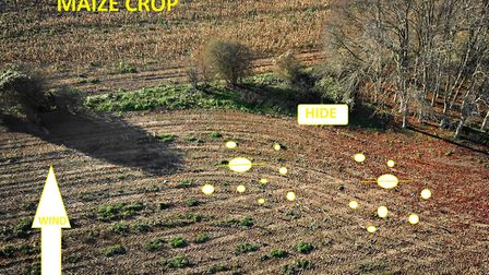 Drone image of Andy Crow's decoy set up Pic credit: Emily DAmment
