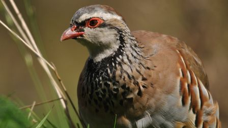 Wild Justice was on a mission to get gamebird releasing banned within 5km of protected sites in its