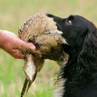 A good delivery to hand is something most gundog owners strive for