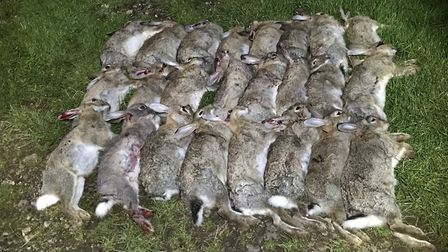 Mick hadn't seen this many rabbits in years. He was operating at one every five minutes!