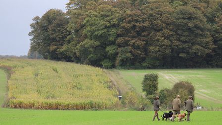 On open land, the presence of hedgerows, game crops and supplementary feeding is positive for farmla
