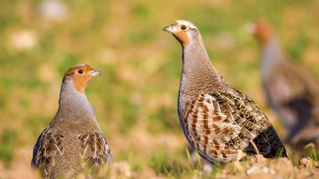 A total of 25 species from the Red List for Birds of Conservation Concern were recorded in last year