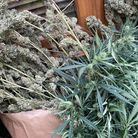 Police were called to North Brink in Wisbech by British Gas, who believed there was a cannabis factory inside the house.