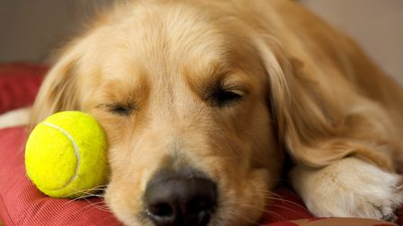Remember to put the ball away again after using, as you would with other retrieving items. Credit: R