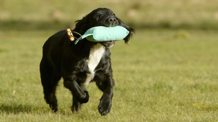 Move on from a tennis ball as soon as your pup is ready, to avoid creating a ball-mad monster!