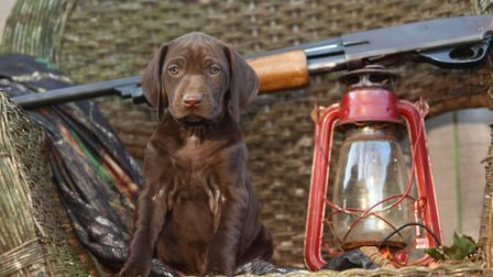 If you're on the hunt for a working dog, take a look at our tips for finding the right match for you