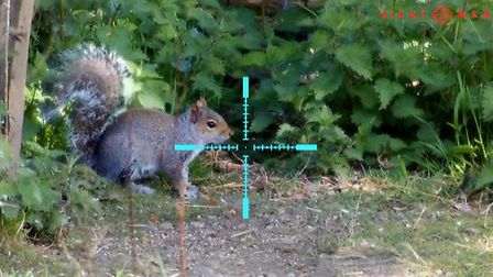 A steady 8 x magnification turns this squirrel into a dead cert.