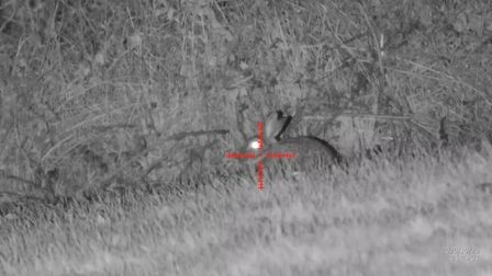 LOU - CAN YOU PLACE THESE FOUR PICS IN SERIES, PLEASE? 4X magnification, rabbit at 24 yards.