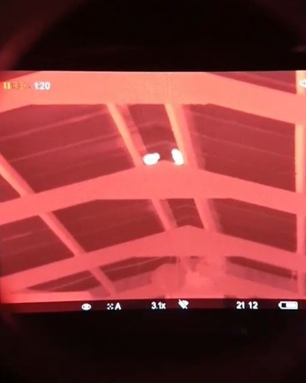 A view through the thermal clearly shows pigeons in the barn