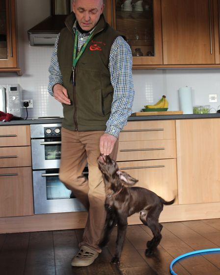 Your aim is to make sure the puppy is following the feed treat