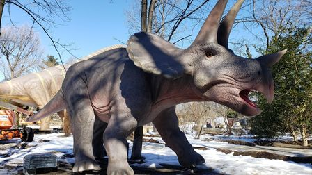 A triceratops at Zoorassic Park in Whipsnade Zoo.