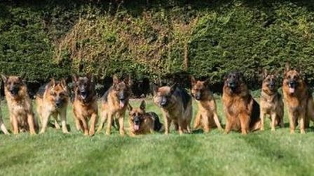 The fundraiser aims to give these Iolanda German Shepherd dogs a new home as Iolanda Kennels in Wisbech is up for sale.