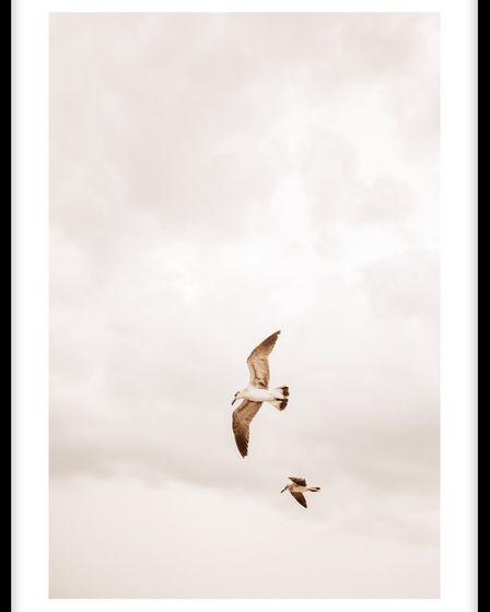 Flying Birdsposter fromMolly-Mae Hague's collection with Desenio.