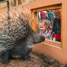 Young visitors to Paradise Wildlife Park lookat one of the zoo's new porcupines.