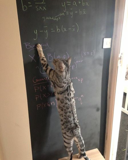 David Rock sent in this pic of his 'clever' cat Leo.