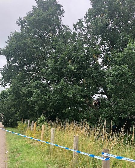 The oak tree was deemed a threat to human life as branches overhanging the public footpath began cracking