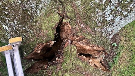 The oak was deemed to dangerous and beyond the point of recovery