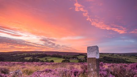 At the height of summer the sun sets over the blooming heather on the North Yorkshire Moors