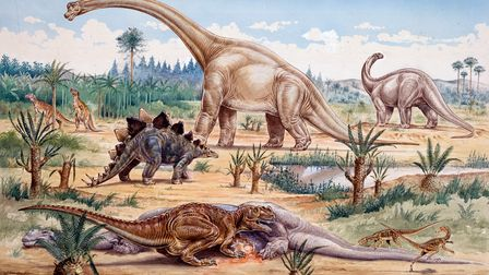A Ceratosaurus feeds on a dead Apatosaurus as do two small Coelurosaurs (Coelurus). Behind L-R are 2