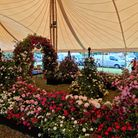 Peter Beales Roses, based in Attleborough, won two awards at the RHS Hampton Court Palace Garden Festival