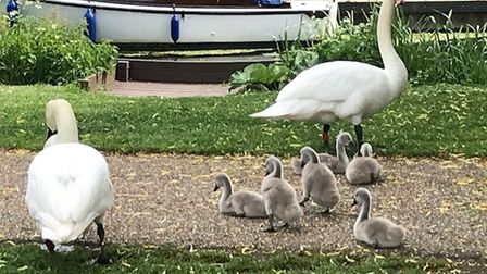 Len Kirby took this photo at Godmanchester Causeway