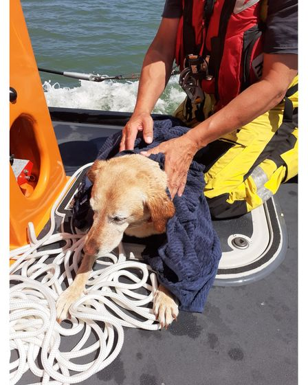 The Labrador dog after it waspulledfrom the sea on to the RNLI relief lifeboat Bridie O'Shea in Lowestoft.