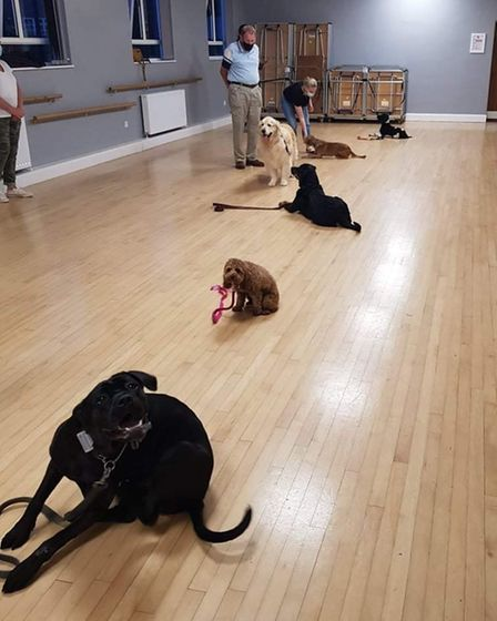 Dogs being trained at Take The Lead Essex