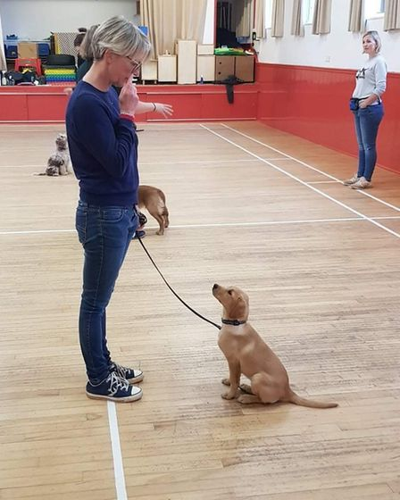 A woman training a dog at Take The Lead Essex