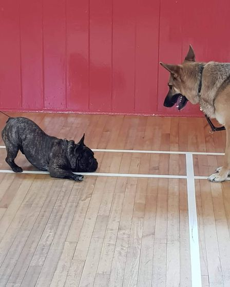 Two dogs taking part in dog training at Take The Lead Essex