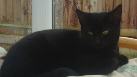 Lolaescaped from a home in Bintree Road, Billingford on Sunday, July 18.