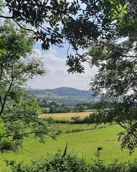 View from Pilston Pen to Lewesdon Hill