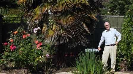 Frank Powell, 85, planted the palm tree around 20 years ago - and now it is 20ft tall.