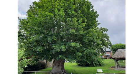 Martyrs Tree in Tolpuddle