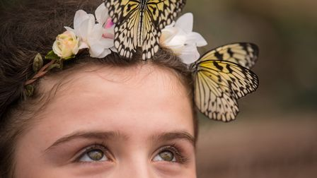 Freya, 10, looks at two Tree Nymph butterflies in the Sensational Butterflies exhibition, at the Nat