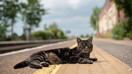 Sue Cox's cat sun bathing on the platform. Picture: Sarah Lucy Brown