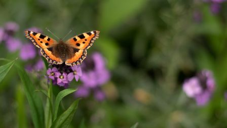A butterfly at Somerleyton station. Picture: Sarah Lucy Brown