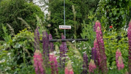 Somerleyton station in full bloom. Picture: Sarah Lucy Brown