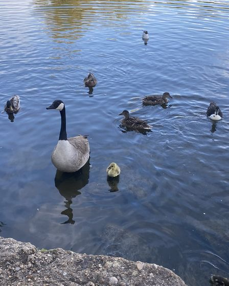 Mother and babies at Hartford, taken by Vicky Turnbull.