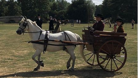 A Welsh pony called Milo pulling along a carriage with two people sitting