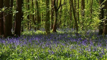 Warsley Wood is a Site of Special Scientific Interest.