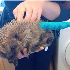 Wendy Henrys is supporting London Colney Hedgehog Rescue