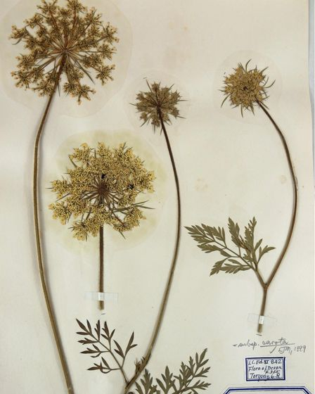 Pressed flowers from the herbarium at Torquay Museum, used to inspire the new lights