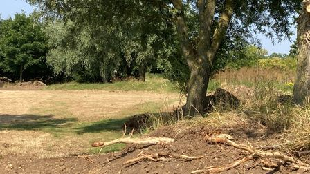 Tree roots uncovered by construction work at Fairlop Waters
