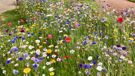 Wild flowers on show at Torre Abbey